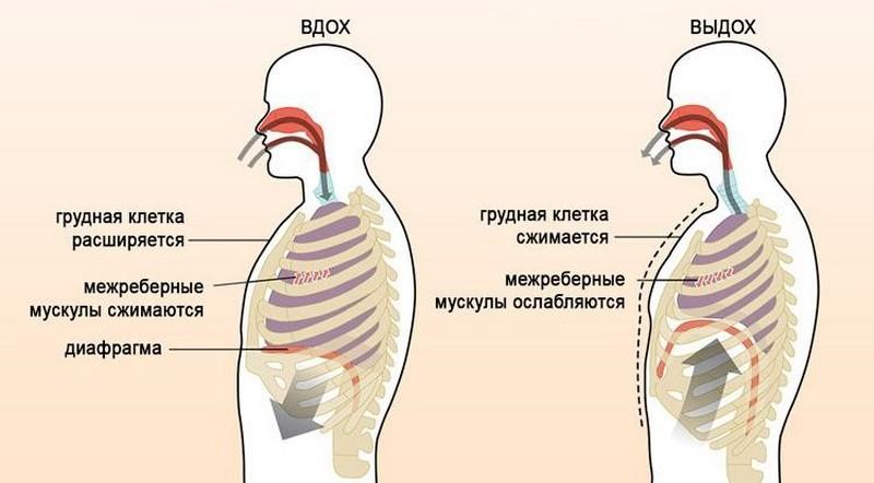 Дыхание диафрагмой СДВГ